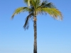 d. 26. Mar: Jungle Queen, Fort Lauderdale